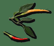 fresh-peppers